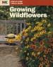 growing-wildflowers